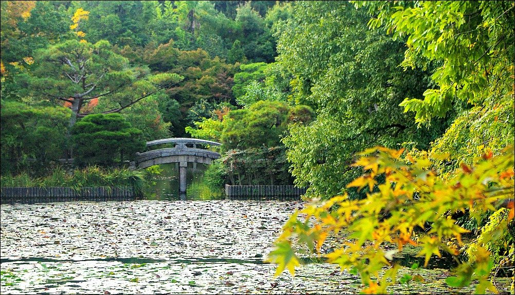 Ryoanji Temple Pond Kyoto