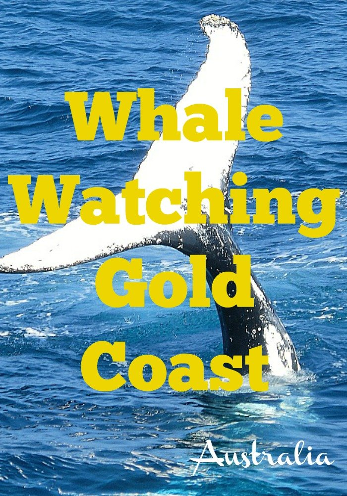 Pin This Whale Watching Gold Coast Pin