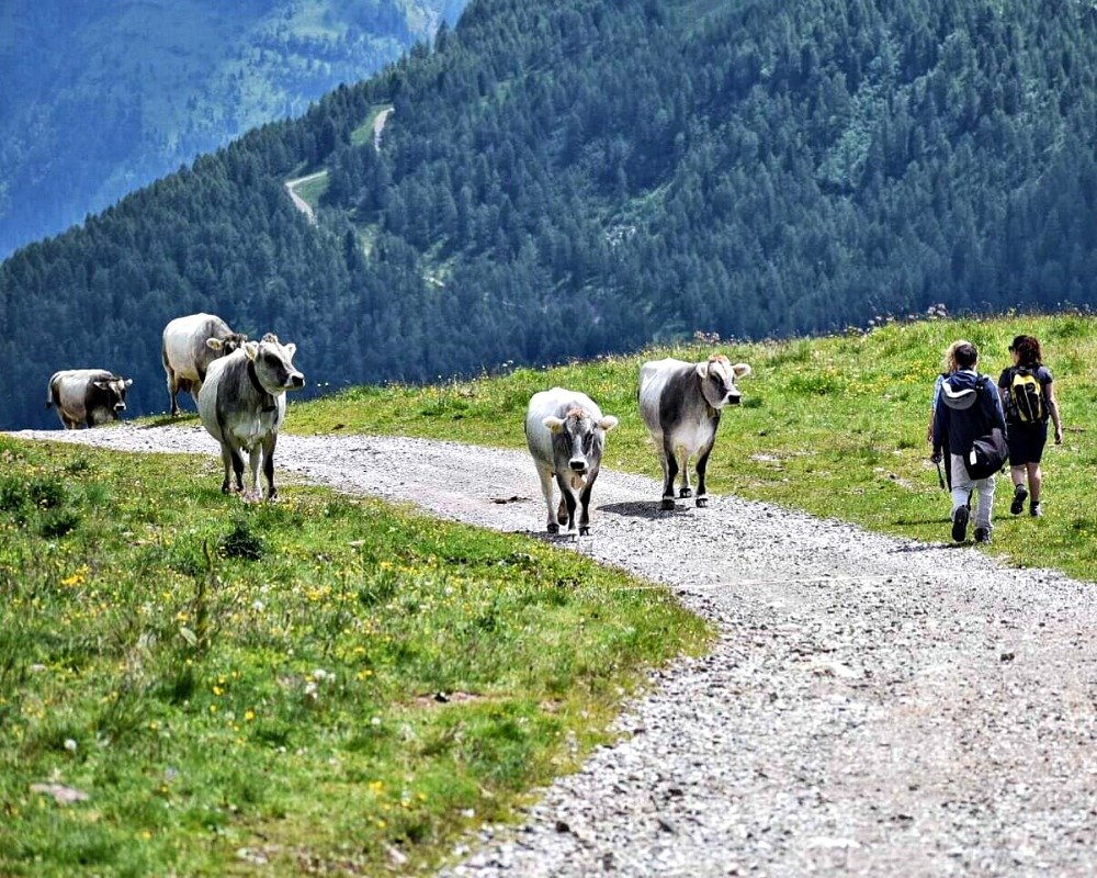 Europe Bucket List photo of crossing pastures while hiking the Alta Via dei Monzoni