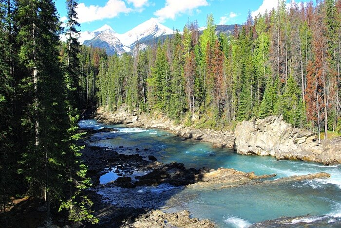 Green pines linke the blue Kicking Horse River in Yoho National Park Canada.