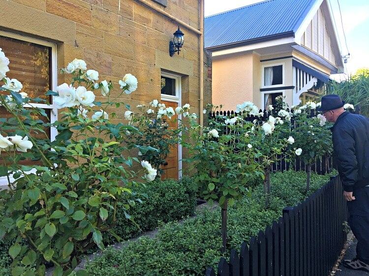Historic brown sandstone house with white roses in front at Battery Point