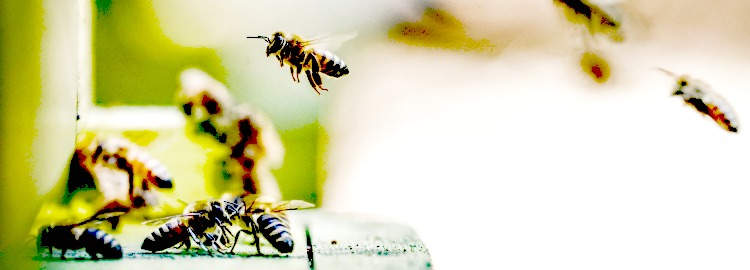 Soft Focus photo of flying bees
