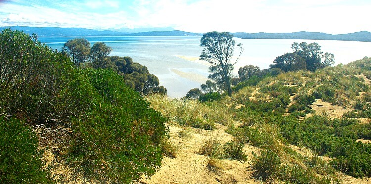 Habitat of little penguins in the sand dunes and bushes at The Neck on Bruny Island with the blue ocean behind