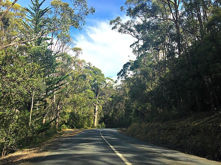 Bruny Island Sealed road with trees crowding the edges