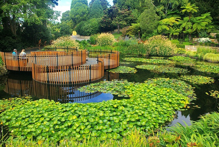 Lily Pond with circular timber lily pad viewing pods