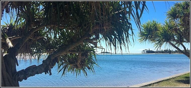 Looking toward the mouth of the Maroochy River through the branches of a pandanus Palm