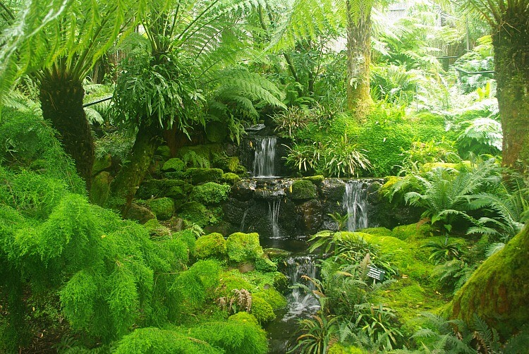Native Fernery with cascading water Hobart