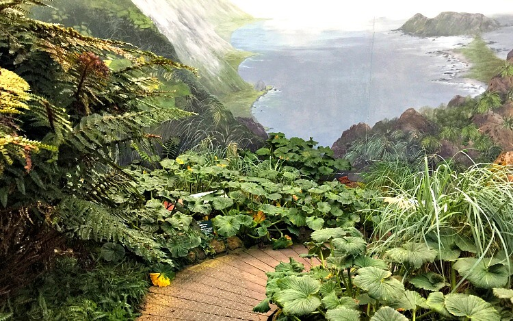 Boardwalk and plants inside the sub antarctic plant house at Royal Tasmanian Botanical Gardens