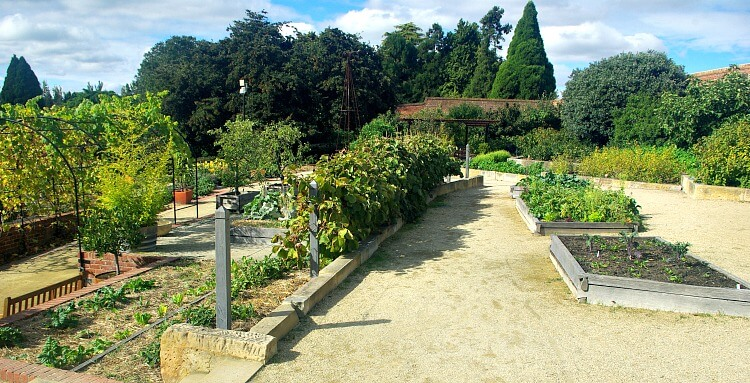 Vegetables growing in garden beds at the Tasmanian Community Food Garden
