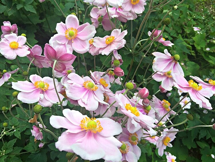 Windflowers Hobart Garden