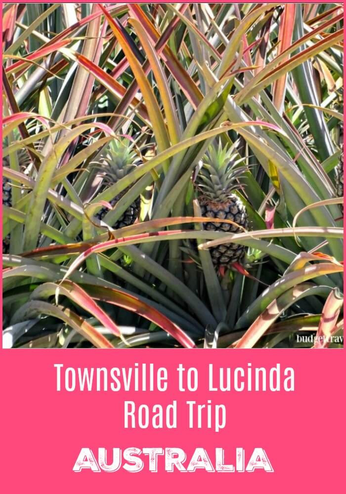 Pineapples on a Townsville to Lucinda Road Trip