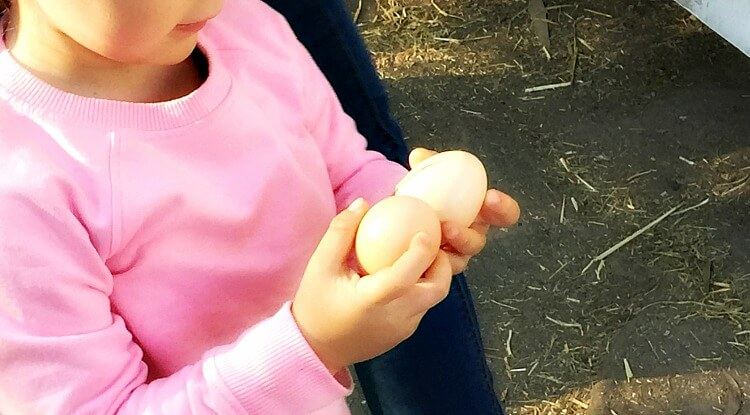 Little girl wearing pink pullover holding two eggs one in each hand having just collected them