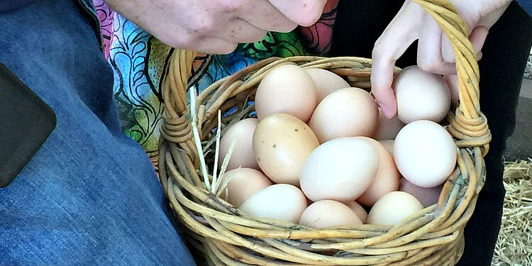 Placing eggs in the egg basket