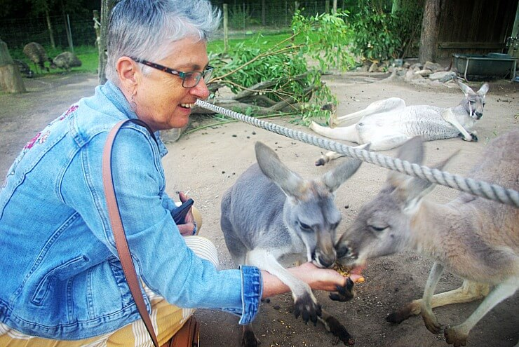 Feeding Kangaroos and Wallabies at Paradise Country Theme Park Queensland