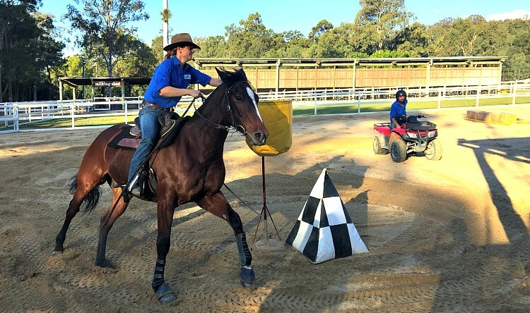 Australian Stock Horse Demonstration at Gold Coast Theme Park