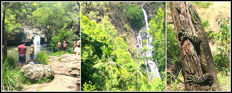 Collage of scenes from Kondalilla Falls National Park