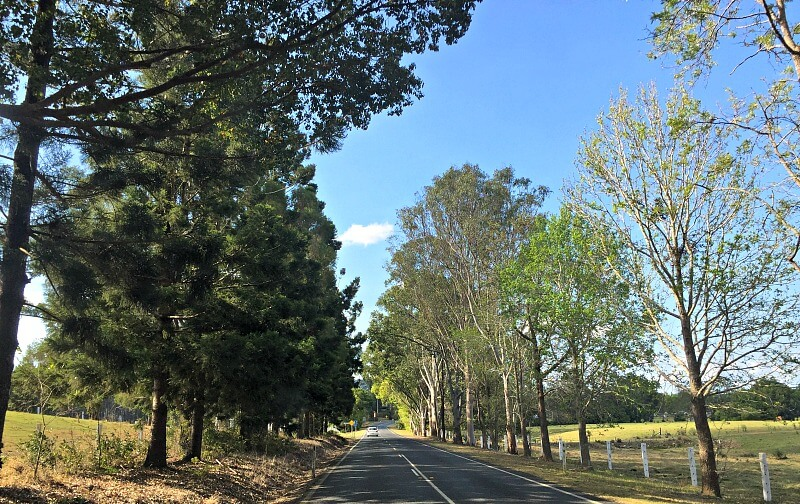 The road into Kenilworth from Maleny is lined with trees