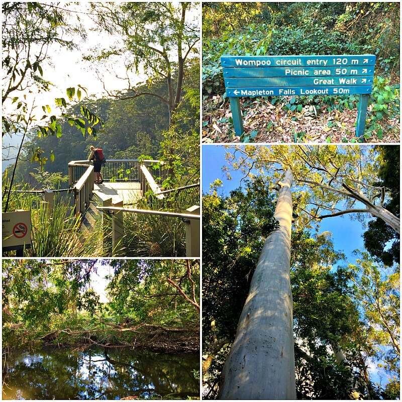 Collage of trees and lookouts at Mapleton Falls National Park