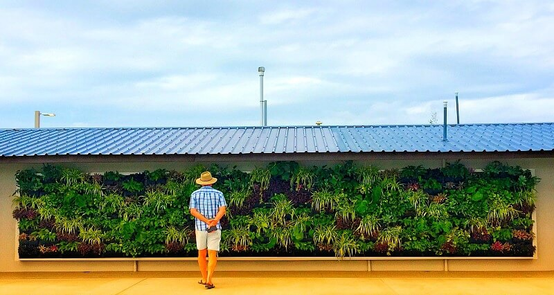 Vertical Garden on the new amenities block behind Whitsunday Sailing Club Airlie Beach
