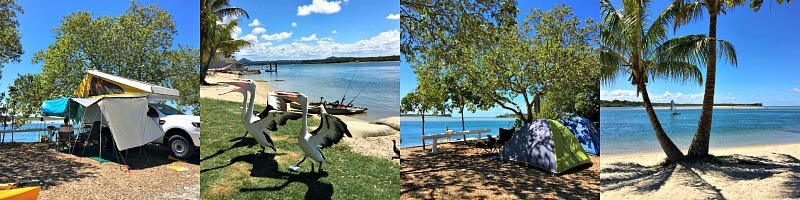 A Noosa River Bike Ride or Noosa River Walk showing pelicans catching fish and camping beside the Noosa river