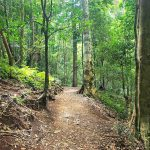 How to get to Bunya Mountains with Bunya Mountain Campgrounds and Airbnb Bunya Mountains