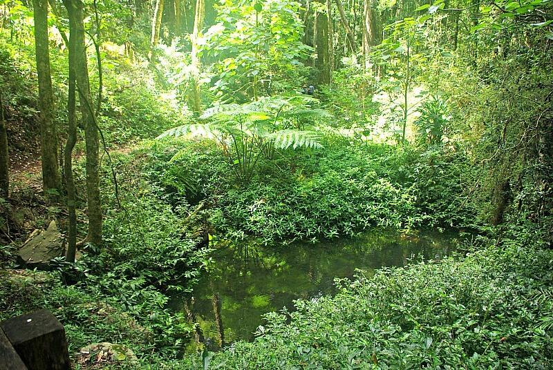Sun filtering into green rainforest