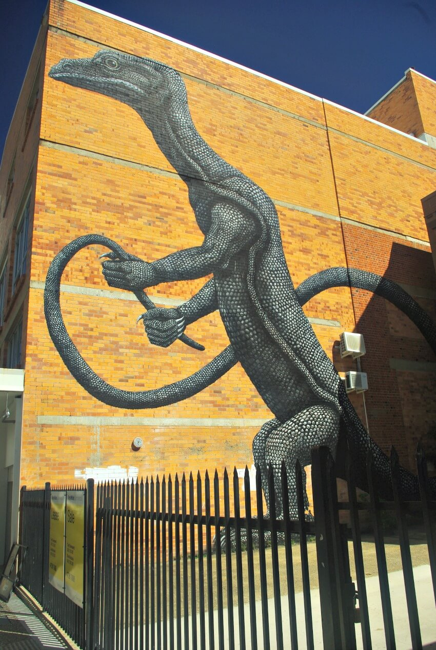 Street Art of Goanna holding it's own tail like a whip by ROA Townsville
