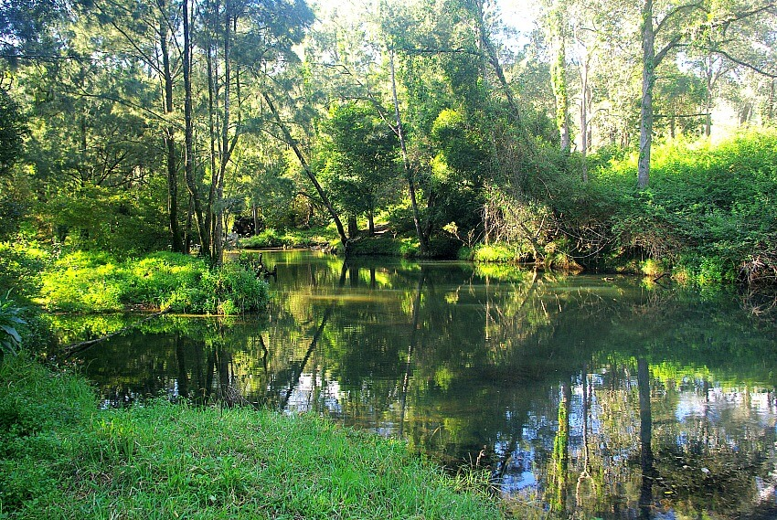 Broken River at Eungella Queensland showing river and greenery on the banks
