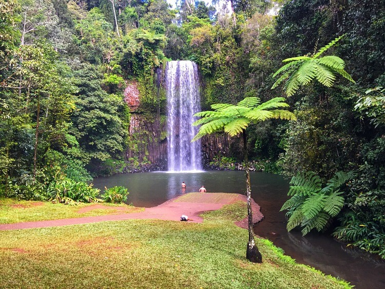 Millaa Millaa Falls with pool and palm trees