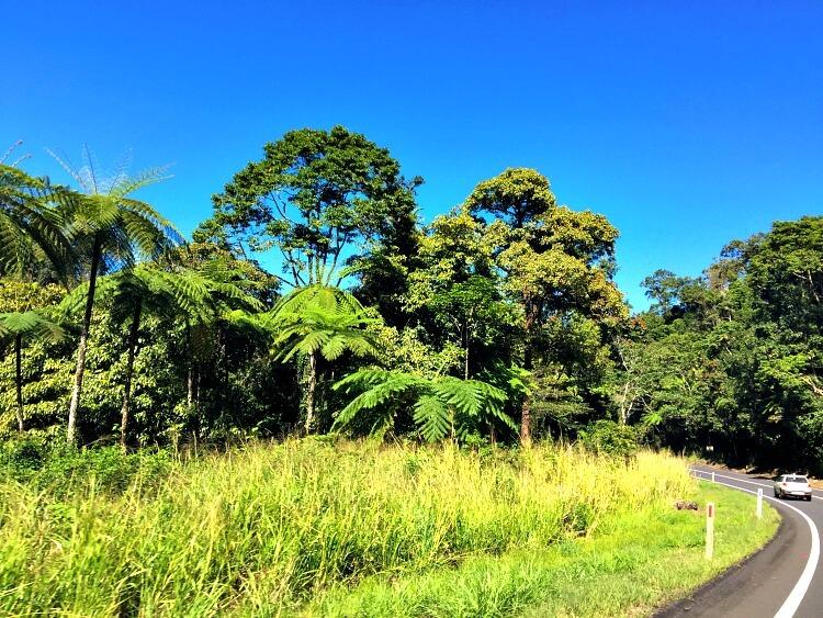 Descending through Rainforest on the Palmerston Highway