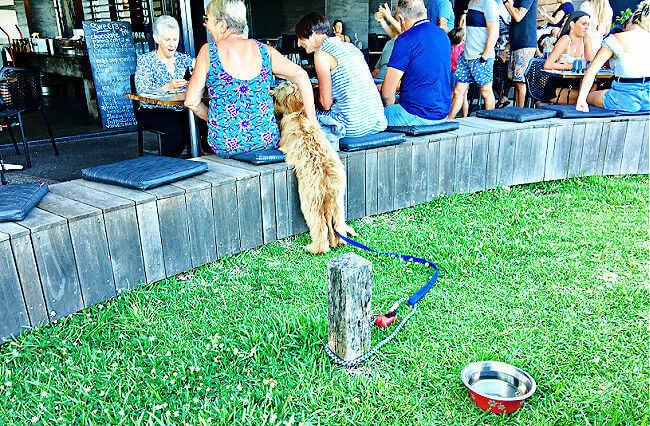 Dog at Canteen Bar and Grill Coolum Beach