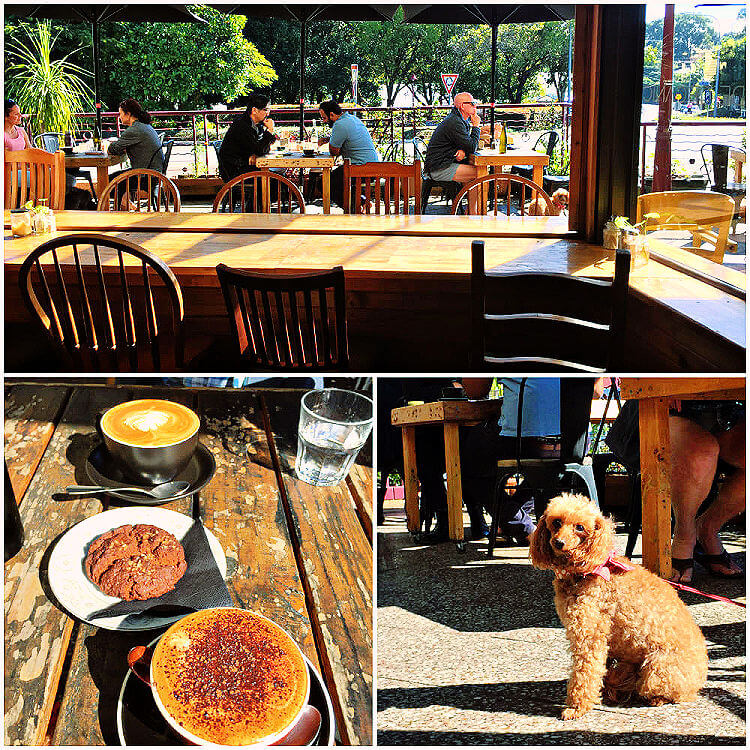 Collage of Dogs Cafe and coffee and cake at The Shak Buderim