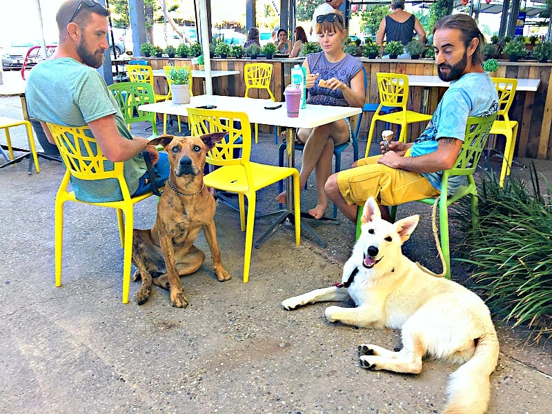 Yum Gelato Welcomes Dogs
