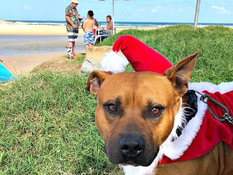 Dog Dressed as Santa