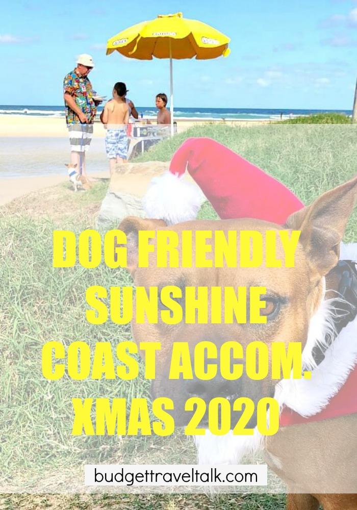 Dog at Sunshine Coast